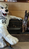 Police K9 Corporal Sits With The Grizz